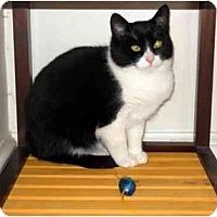 Adopt A Pet :: Reginald - Alexandria, VA
