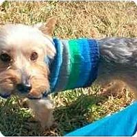 Adopt A Pet :: Maxx - Ocala, FL