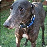 Adopt A Pet :: RJ's Francisco