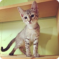 Adopt A Pet :: Scarlett - Raleigh, NC