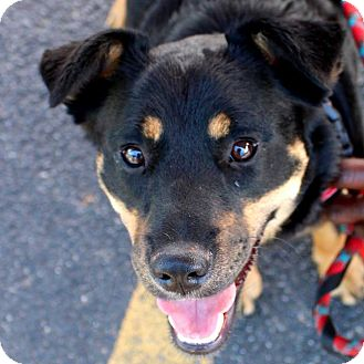 Shepherd (Unknown Type)/Border Collie Mix Dog for adoption in Hopkinsville, Kentucky - Emma