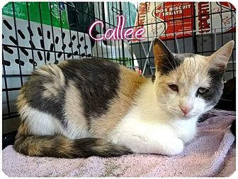 Calico Kitten for adoption in Ringgold, Georgia - Callee