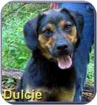 Shepherd (Unknown Type)/Hound (Unknown Type) Mix Dog for adoption in Aldie, Virginia - Dulcie