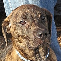 Adopt A Pet :: Teddi - Germantown, MD