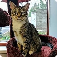 Adopt A Pet :: Greta Garbo - Salt Lake City, UT