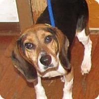 Adopt A Pet :: Kelli - Avon, NY