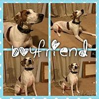Adopt A Pet :: Boyfriend - Garden City, MI