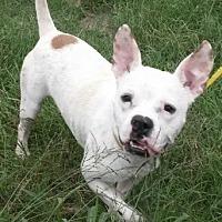 Adopt A Pet :: PJ - East Hartford, CT