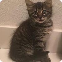 Adopt A Pet :: Maxwell - Houston, TX