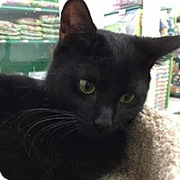 Adopt A Pet :: Ava - Hamburg, NY