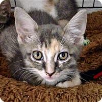 Adopt A Pet :: Saffron - River Edge, NJ