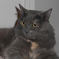 Adopt A Pet :: Giorgia - North Highlands, CA