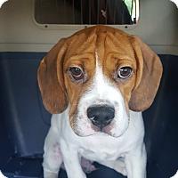 Adopt A Pet :: Mojo - Algonquin, IL
