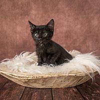 Adopt A Pet :: Gizmo - Columbia, IL