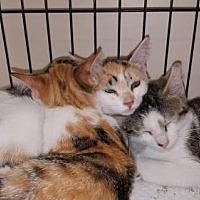 Adopt A Pet :: Faith - Marlton, NJ