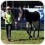 Photo 3 - Donkey/Mule/Burro/Hinny Mix for adoption in Washington, Connecticut - Jett