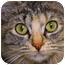 Photo 2 - Domestic Mediumhair Cat for adoption in Bulverde, Texas - Missy