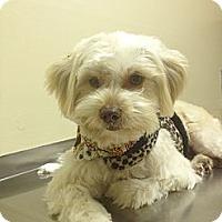 Adopt A Pet :: Maggie Mae - Playa Del Rey, CA