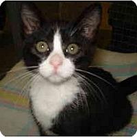 Adopt A Pet :: Kaleana - Mission, BC