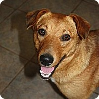 Adopt A Pet :: Fudge - Stilwell, OK