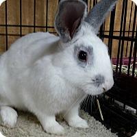 Adopt A Pet :: Gehrig - Williston, FL