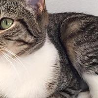 Adopt A Pet :: Yoda - Rosamond, CA