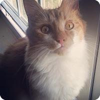 Adopt A Pet :: Bucket - Raleigh, NC
