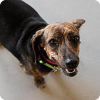 Adopt A Pet :: Bekah - Atlanta, GA