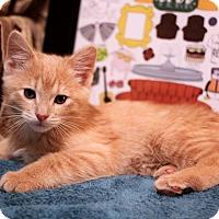 Adopt A Pet :: Gunther - Plymouth, MN