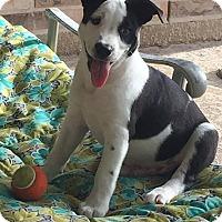 Adopt A Pet :: Lewis - West Warwick, RI