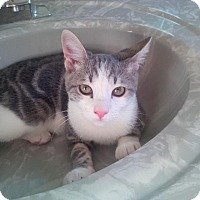 Adopt A Pet :: Dylan - Jackson, NJ
