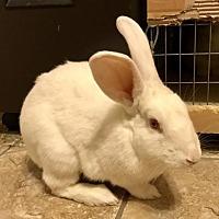 Adopt A Pet :: Lindsay - Mesa, AZ
