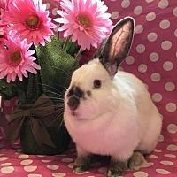 Adopt A Pet :: Pam - Columbus, OH