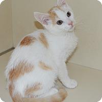 Adopt A Pet :: Vanilla Mice - Richmond, VA
