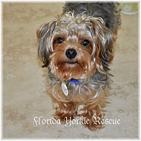 Adopt A Pet :: Gunner - Palm City, FL