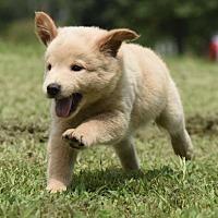 Adopt A Pet :: Betty - Mechanicsburg, PA