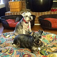 Adopt A Pet :: Zoey and Missy - Sharonville, OH