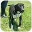 Photo 2 - Bull Terrier Mix Dog for adoption in Lexington, Missouri - Rowdy