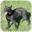 Photo 2 - Australian Cattle Dog/Labrador Retriever Mix Dog for adoption in Cincinnati, Ohio - Cole