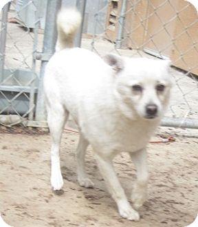 Shiba Inu Mix Dog for adoption in Westminster, California - Homer