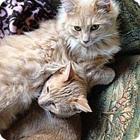 Adopt A Pet :: Davis - Spencer, NY