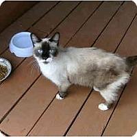 Adopt A Pet :: Lola - Owasso, OK