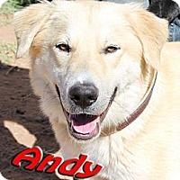 Adopt A Pet :: Andy - Midland, TX