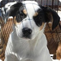 Adopt A Pet :: Winter - Albert Lea, MN