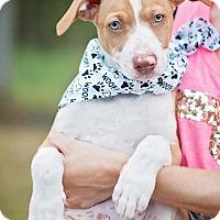 Adopt A Pet :: Junior - Kingwood, TX