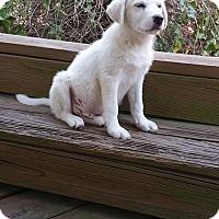 Adopt A Pet :: Pumpkin -Adopted - Croydon, NH