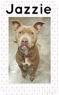 Pit Bull Terrier Mix Dog for adoption in Bryan, Ohio - Jazzie