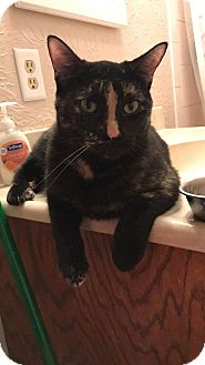 Domestic Shorthair Cat for adoption in Romeoville, Illinois - Lily