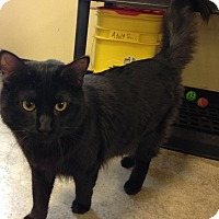 Adopt A Pet :: Johnny - Larned, KS