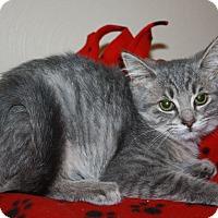 Adopt A Pet :: Maggie - Fort Wayne, IN